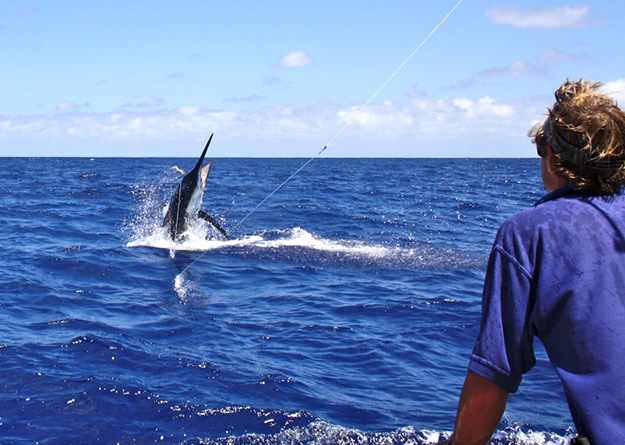 Port douglas game reef and sport fishing charters for Marlin fishing charters